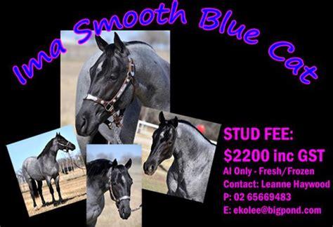 Ima Blue ima smooth blue cat q 5225999 imp top