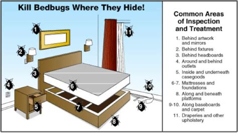 bed bugs   identify  bed bugs infestation