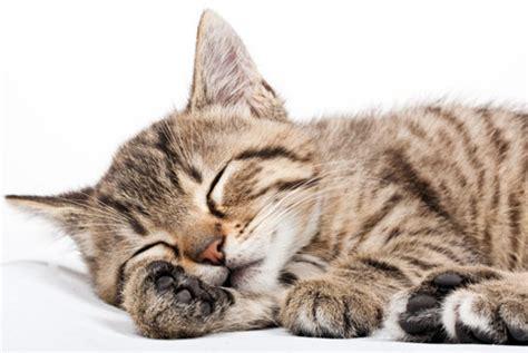 liegen pferde beim schlafen 貓低血鉀性多發性肌病 懶洋洋非幸福 謝馥憶 動物疾病 動物醫院 健康新知 華人健康網
