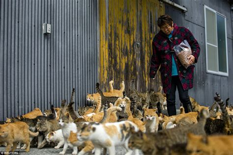 aoshima cat island japan s aoshima island cats outnumber humans six to one