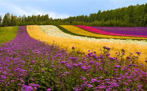 wallpaper hd flower garden garden flower hd wallpapers