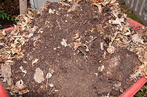 mold in compost leaf mold