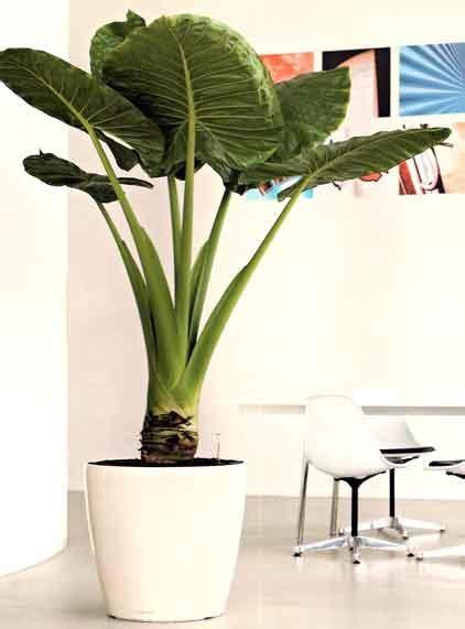 Planters Miami by Miami Plants Paradise Plants Inc Interior Plant Service