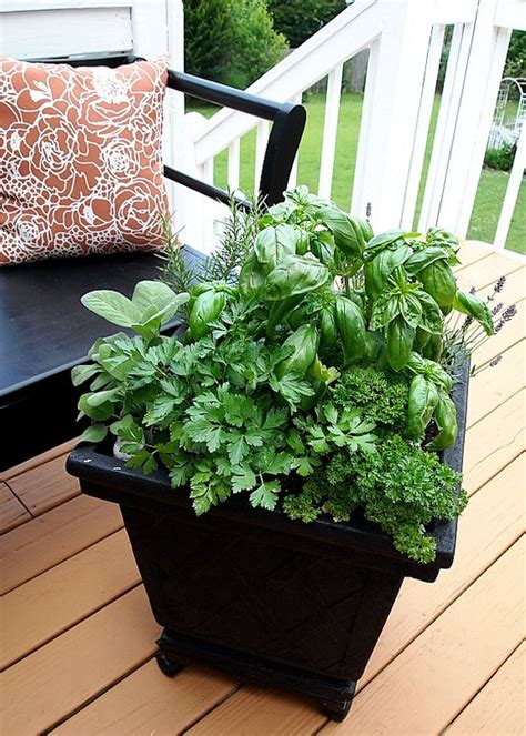 Herb Container Gardening Ideas Tips For Planting A Container Herb Garden Gardens Container Gardening And Herbs Garden