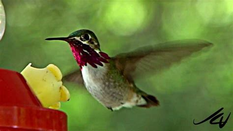 hummingbirds youtube hd youtube