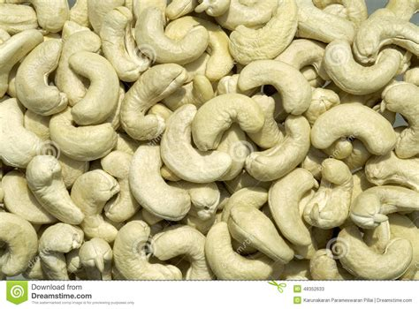 fruit yielding cashew nut kernels fruit stock photo image 48352633