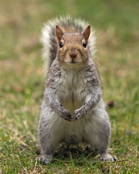 Keep Squirrels Out Of Garden by 1 Way To Keep Squirrels Out Of Your Garden Hobnob Branson