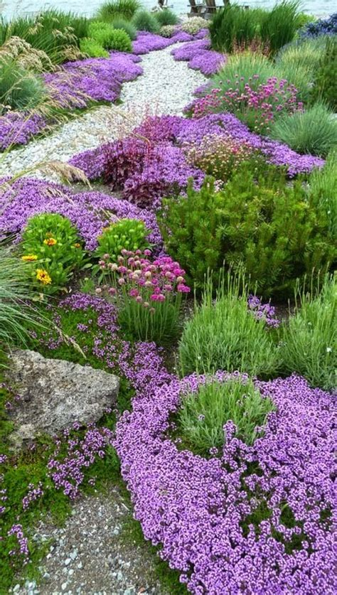 fragrant bedding plants 25 best ideas about ground covering plants on
