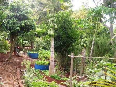 Small Backyard Orchard by Permaculture In A Climate Gardenezi