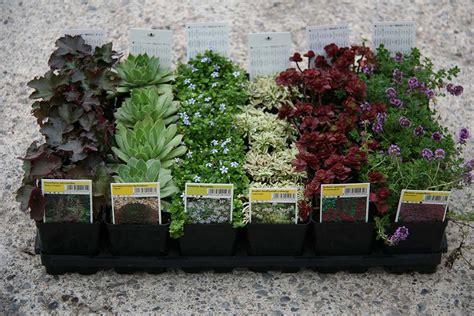 piante da vaso perenni cosa sono e come si mantengono le piante perenni antica