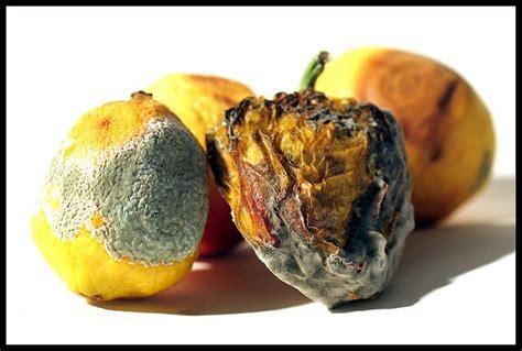 v s fruit and veg 38 best rotten foods images on foods gross