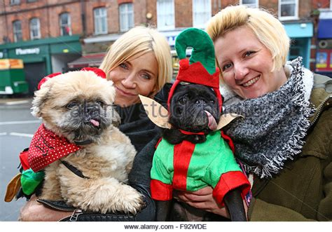 shih tzu imperial and princess type minne stock photos minne stock images alamy