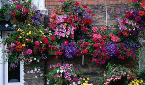 hanging flower garden alan titchmarsh on hanging flower baskets garden