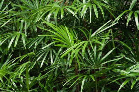 tanaman hias   perbaiki kualitas udara  rumah