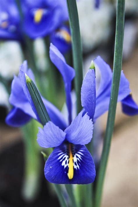fiore botanica immagini fiore petalo botanica flora occhio