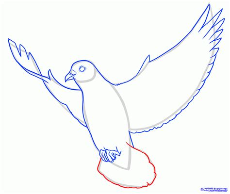 how to draw how to draw doves step by step birds animals free
