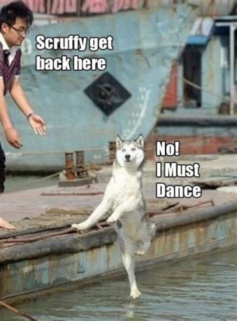 Dancing Dog Meme - dog meme collection funny joke pictures
