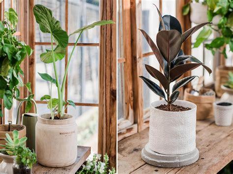pot  plant  drainage holes  images