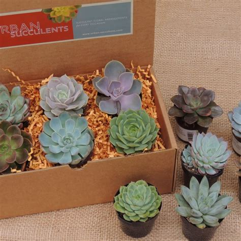Harbor Freight Gift Card Balance Check - send a succulent as a gift gift ftempo