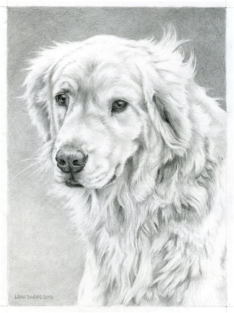 Golden Retriever Coloring Pages by Golden Retriever Coloring Page Davies Work