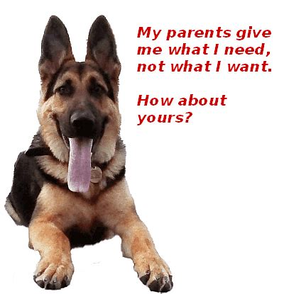 why do dogs always want food dog questions and answers sei mygermanshepherd org