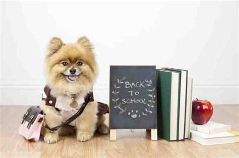 puppy school back to school for your dogtime