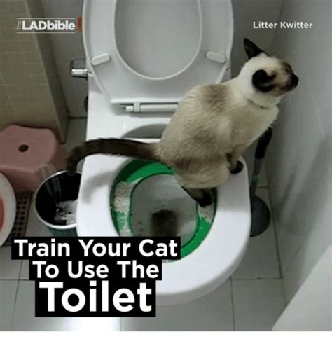 how to train your dog to use bathroom outside how to teach your to use the bathroom outside how to