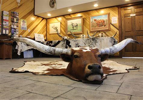 Longhorn Rug by Y 9361