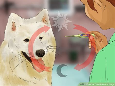 can dogs run fevers 3 ways to treat fever in dogs wikihow