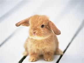 10 cutest animals wonderwordz