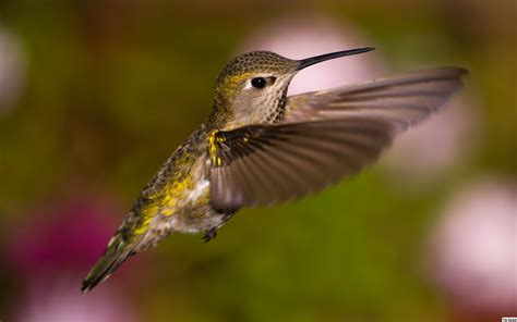 florida hummingbirds autos post