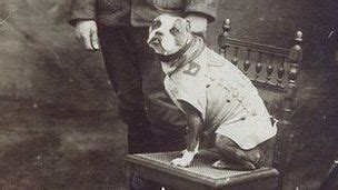 Sergeant Stubby Newspaper 25 Best Ideas About Sergeant Stubby On Working Dogs War Dogs And Dogs