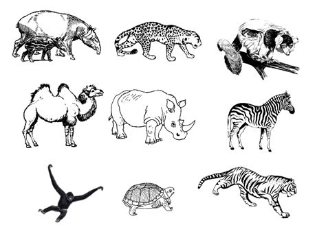 Drawing Zoo Animals how to draw zoo animals