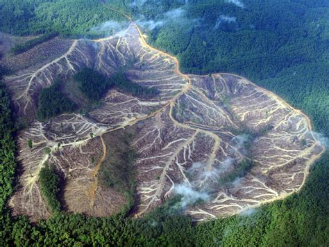 amazon indonesia deforestation in amazon could reduce snowfall in sierra