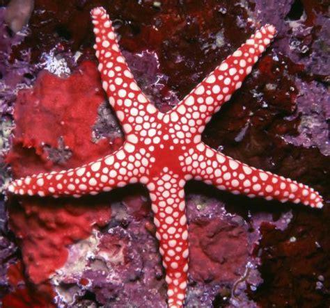 ver imagenes interesantes 6 interesantes datos sobre las estrellas de mar criaturas