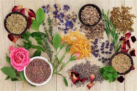 Salep Hd panduan mengonsumsi obat herbal alodokter