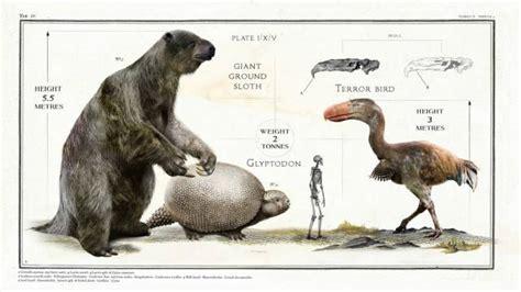 giant animals   extinct long   pics izismilecom