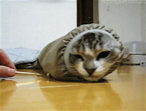 sock cat gif sock cat gif find on giphy