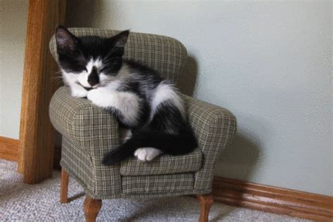 Cat Chair by Friends Cat In Cat Chair Pics