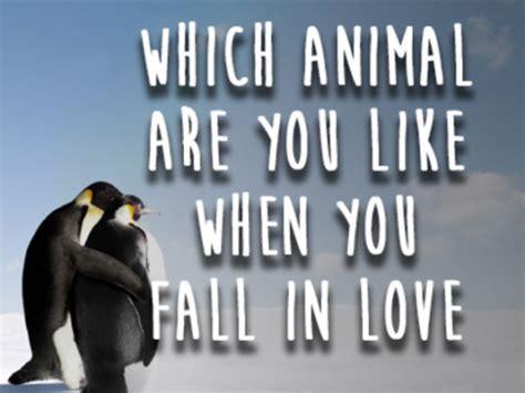 animal      fall  love