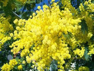 casa co de fiori roma o falc 195 o de jade o dia da mulher dia da mimosa