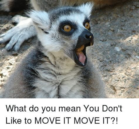 Lemur I Like To Move It Move It by 25 Best Memes About Move It Move It Move It Move It Memes