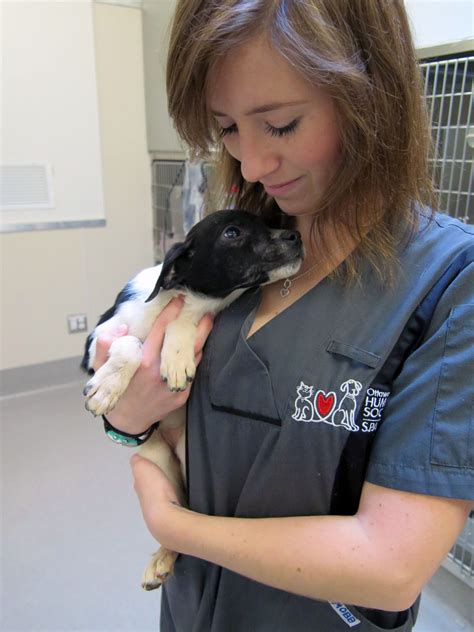 the puppy patch abandoned puppy found nearly frozen on snowmobile trail 1310 news