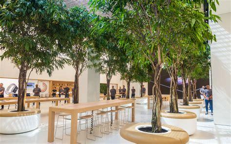 store tree a sneak peek inside the new dubai apple store what s on