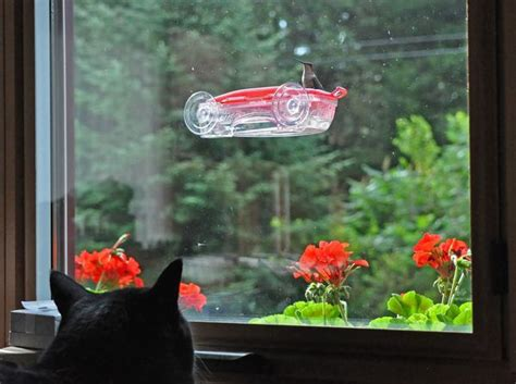 keep cats indoors for the hummingbirds sake the zen