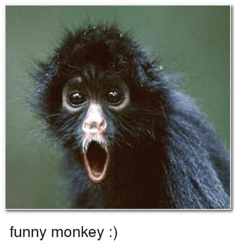 Funny Monkey Memes - 25 best memes about funny monkeys funny monkeys memes