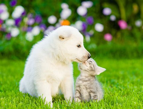 Hund Und Katze In Einem Haushalt 3861 by Hund Und Katze So Klappt Die Eingew 246 Hnungszeit