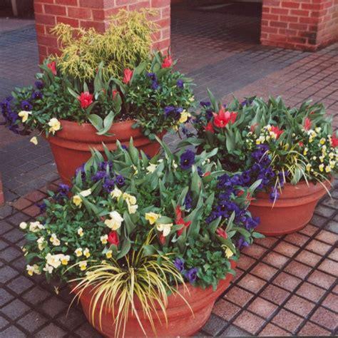 best winter container plants for garden decoredo