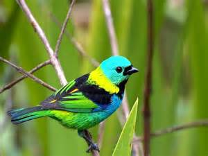 colorful bird pictures colorful birds xcitefun net