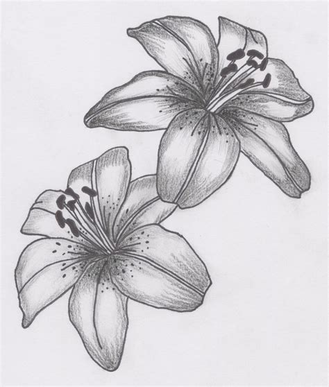 lilly tattoo designs tattoos designs ideas and meaning tattoos for you
